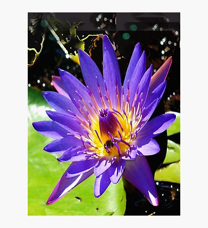 Purple water lily vertical view Photographic Print
