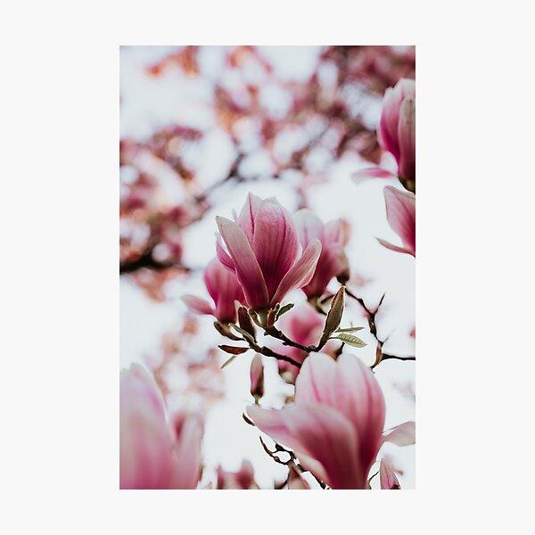 Oh my beautiful magnolia  Photographic Print