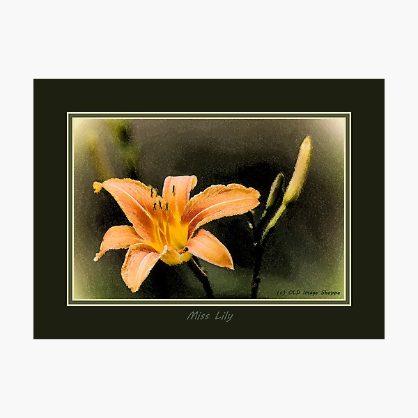 Miss Lily Photographic Print