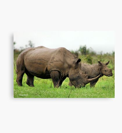 MOTHER & CALF - White Rhinoceros - Ceratotherium sumum -WIT RENOSTER Canvas Print
