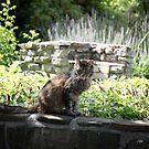 Thai in the Garden by Lynn Starner