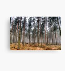 Pine Trees in Morning Fog. Canvas Print