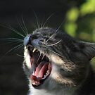 Yawning cat by turniptowers