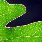 Leaf Yin / Yang von Chris Gudger