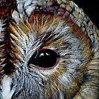 Tawny Owl  by Diane McWhirter