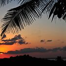 Tropical sunset with red sky, clouds and coconut tree silhouette 2 by Anton Oparin