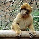 Monkey by bbgon