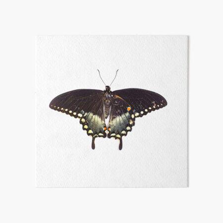 Butterfly Art Board Print
