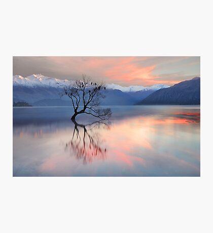 Pink Sky at Lake Wanaka Photographic Print