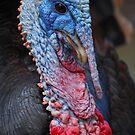 Turkey Boy by Cathy Jones