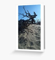 Dunes and Brush Greeting Card