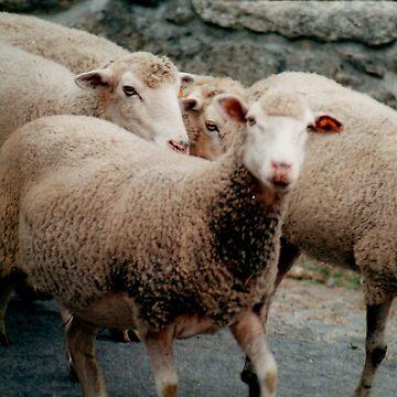 Sheep on the street by DiamondCrusade