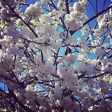 blossom by Mistresslisa666