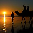 Camels on Cable Beach 1 by Stuart Row