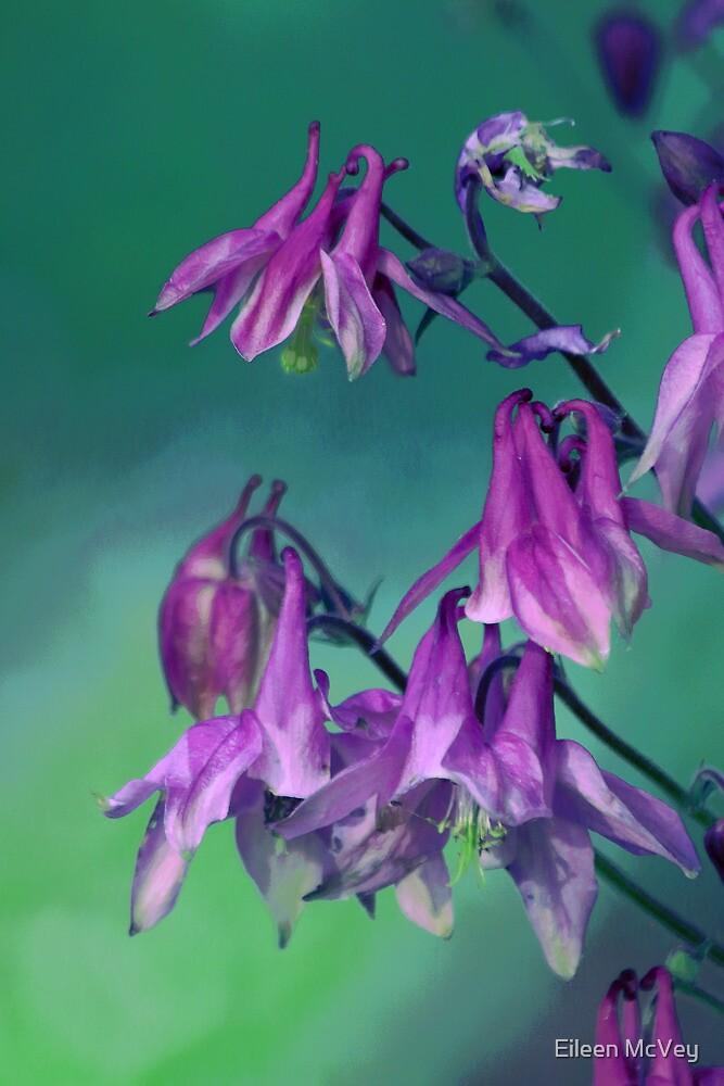 Purple Columbine by Eileen McVey