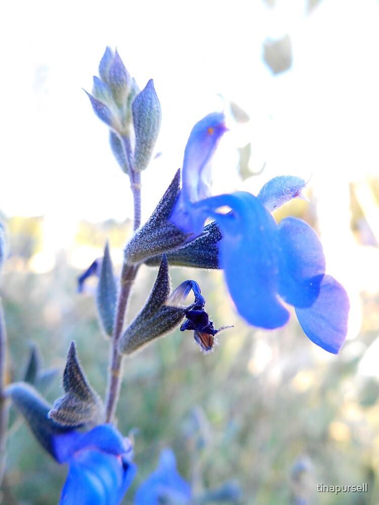 purple by tinapursell
