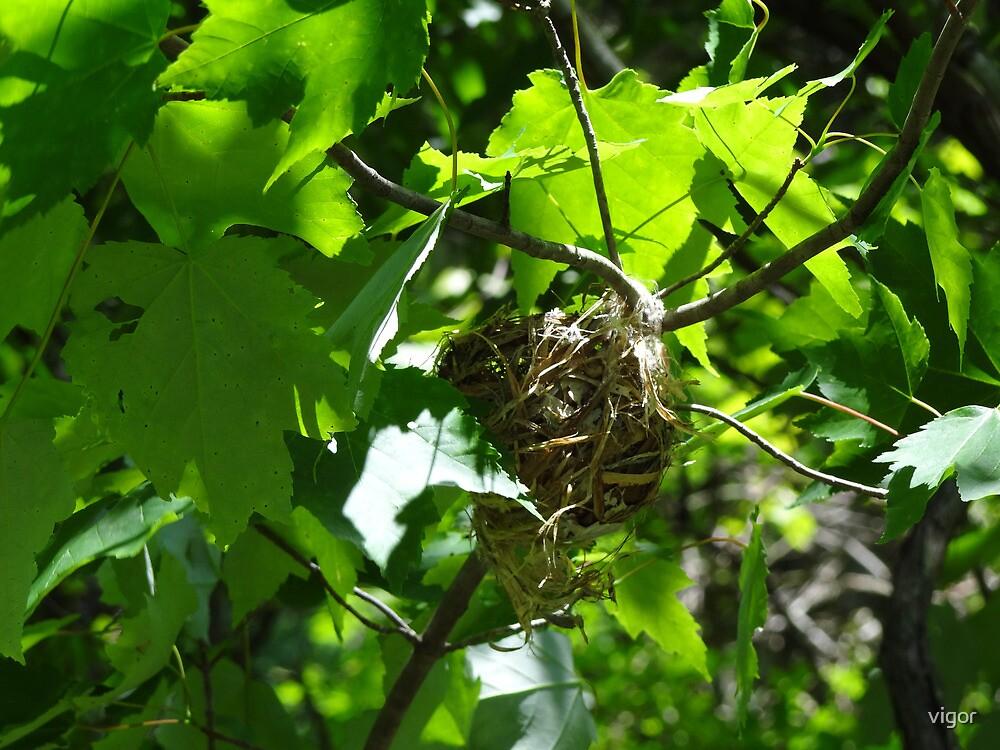 The mystery nest by vigor