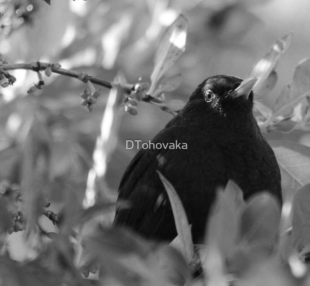 I see you by DTohovaka