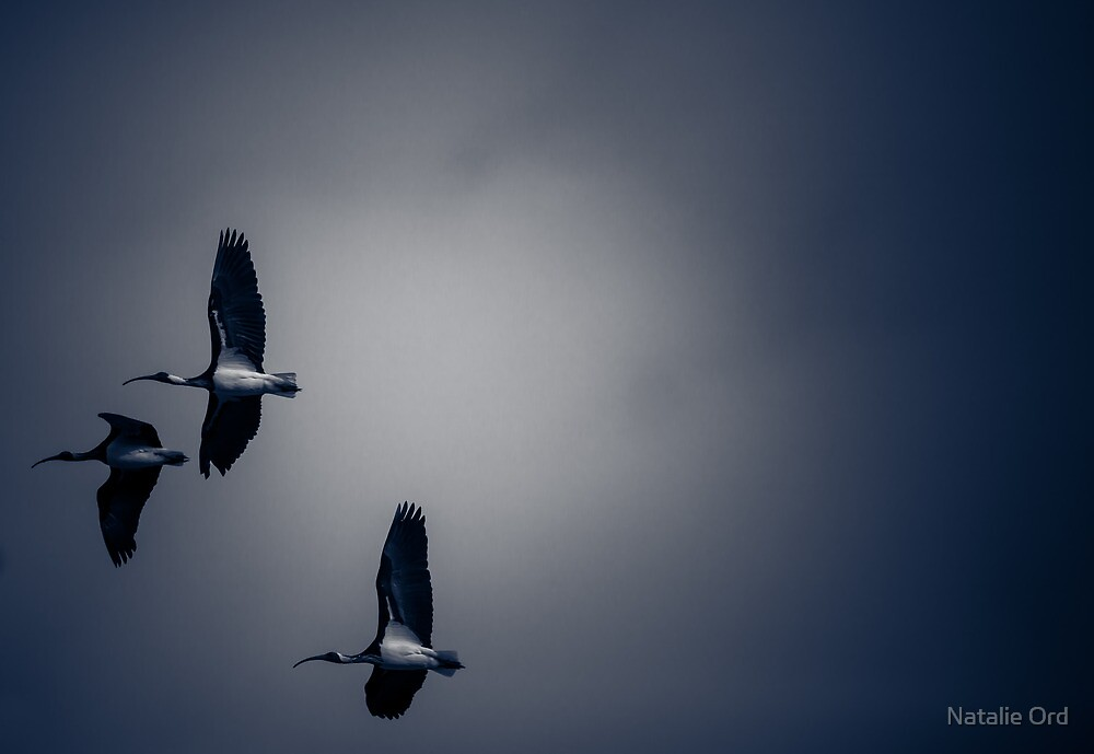 Flight by Natalie Ord