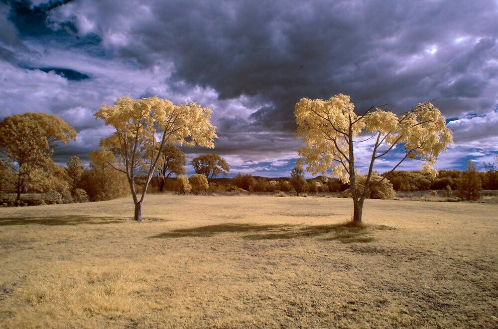 Hope Island Reserve - Infrared Trees 3 by spiritoflife
