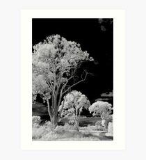 Hope Island Reserve - Infrared Trees 6 Art Print