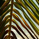 frond memories by dinghysailor1