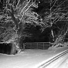 In the snow not everything goes white ? Derry Ireland by mikequigley
