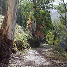 Bogong bush walk Vic by Tom McDonnell