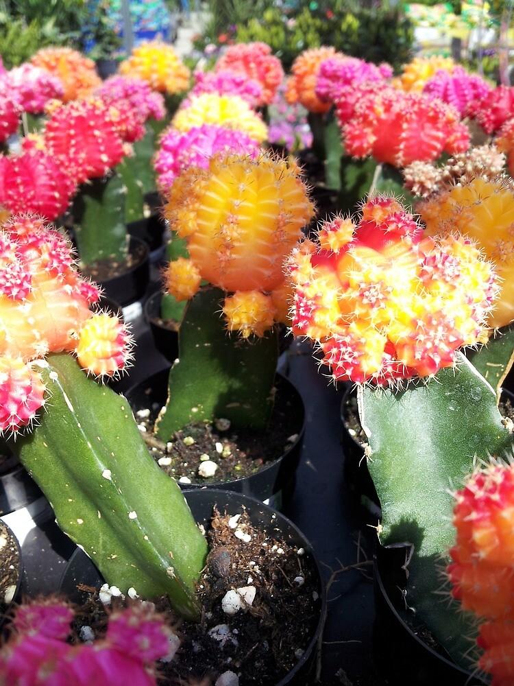 Cute Colourful Cacti by katreanione