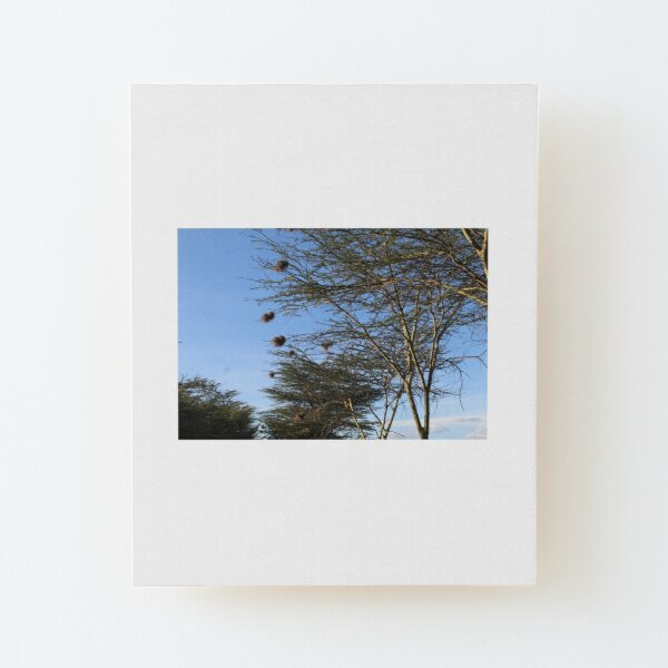 The Nest Collection Wood Mounted Print