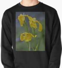 Yellow Flag Iris - Donegal Pullover