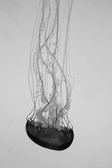 Jellyfish Basics by Kyra Savolainen