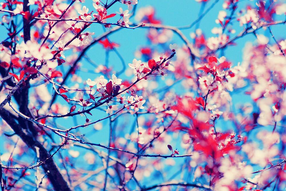 Blooming II by LenkaOBS
