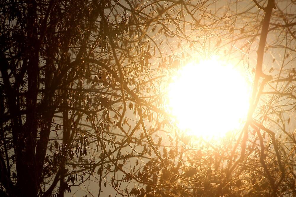 Solstice Sunrise by Sean  Tice