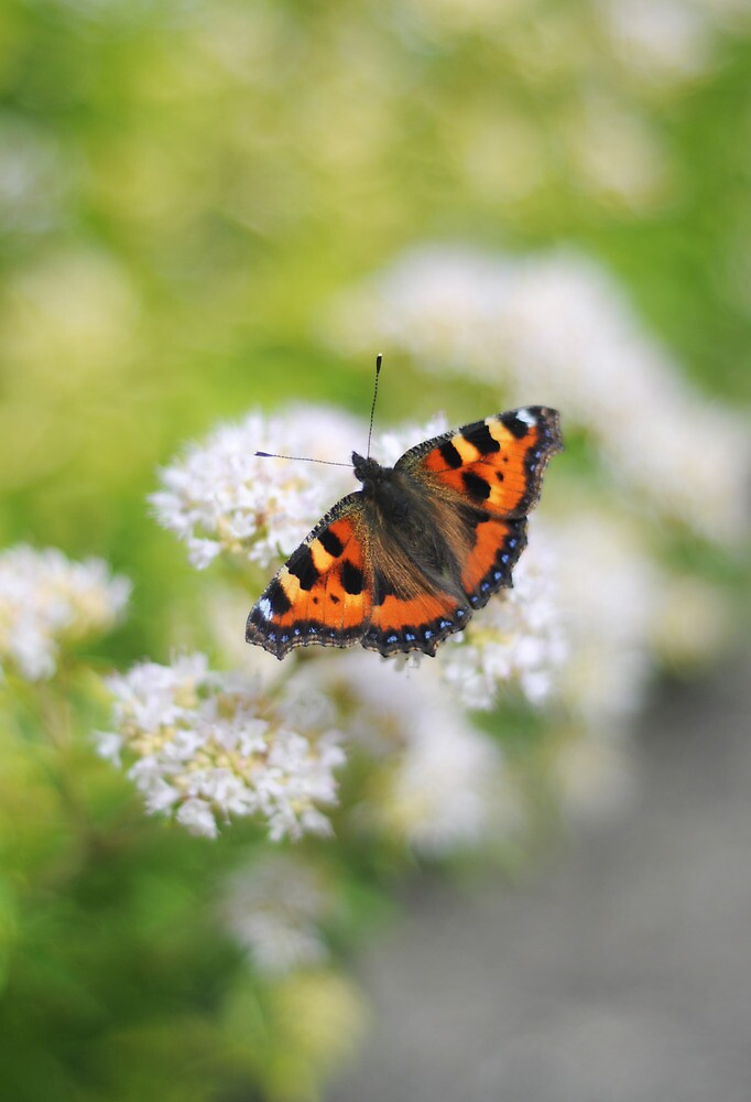 butterfly by Angharad Sophie