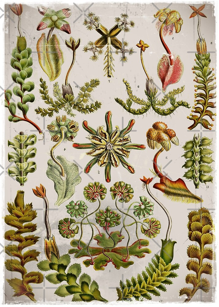 Hepaticae (leaf segments) in Green by diane  addis