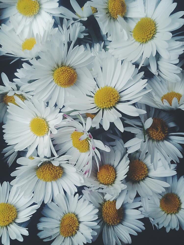 Daisy by sianeilbeck