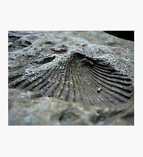 Shell Impression Photographic Print