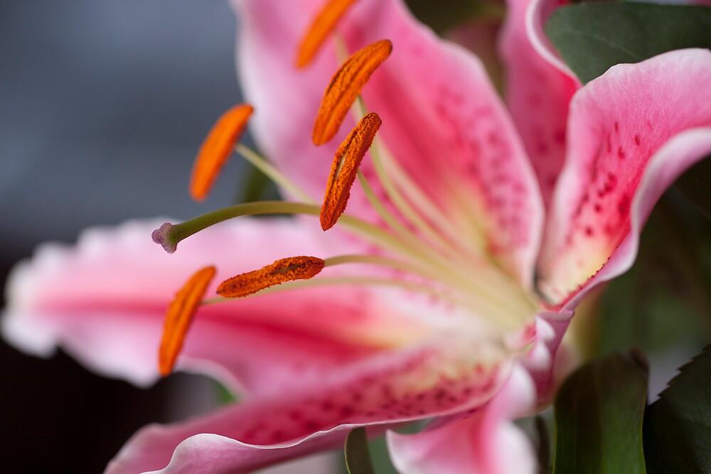 Happy Lily by karasutherland