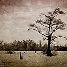 Louisiana Landscape by RayDevlin