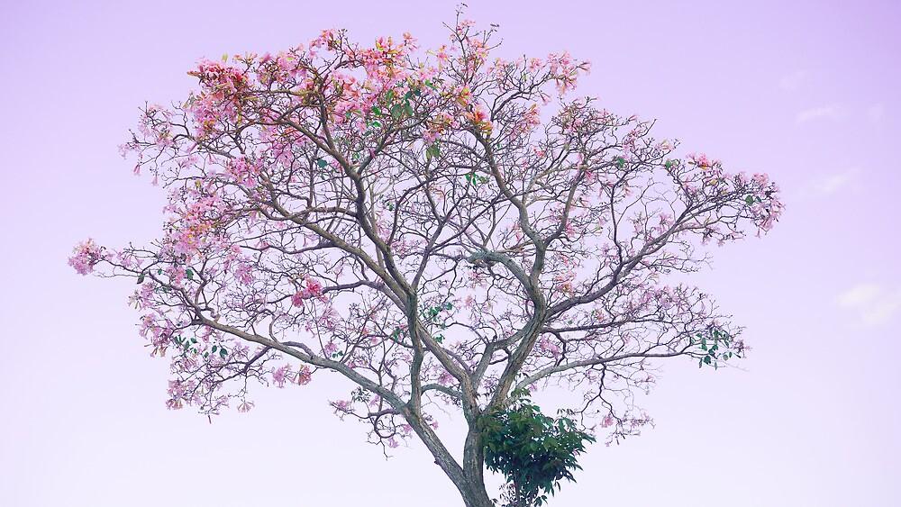 Pink Tree by Tim Burgess