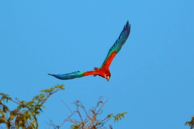 Macaw by JoEveritt