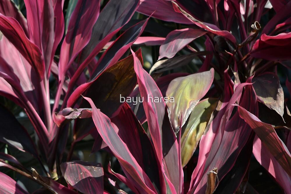 purple leaf by bayu harsa
