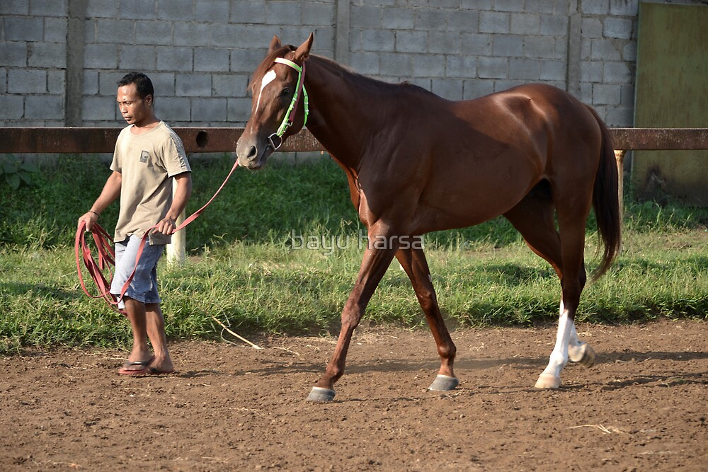 brown horse and a man by bayu harsa