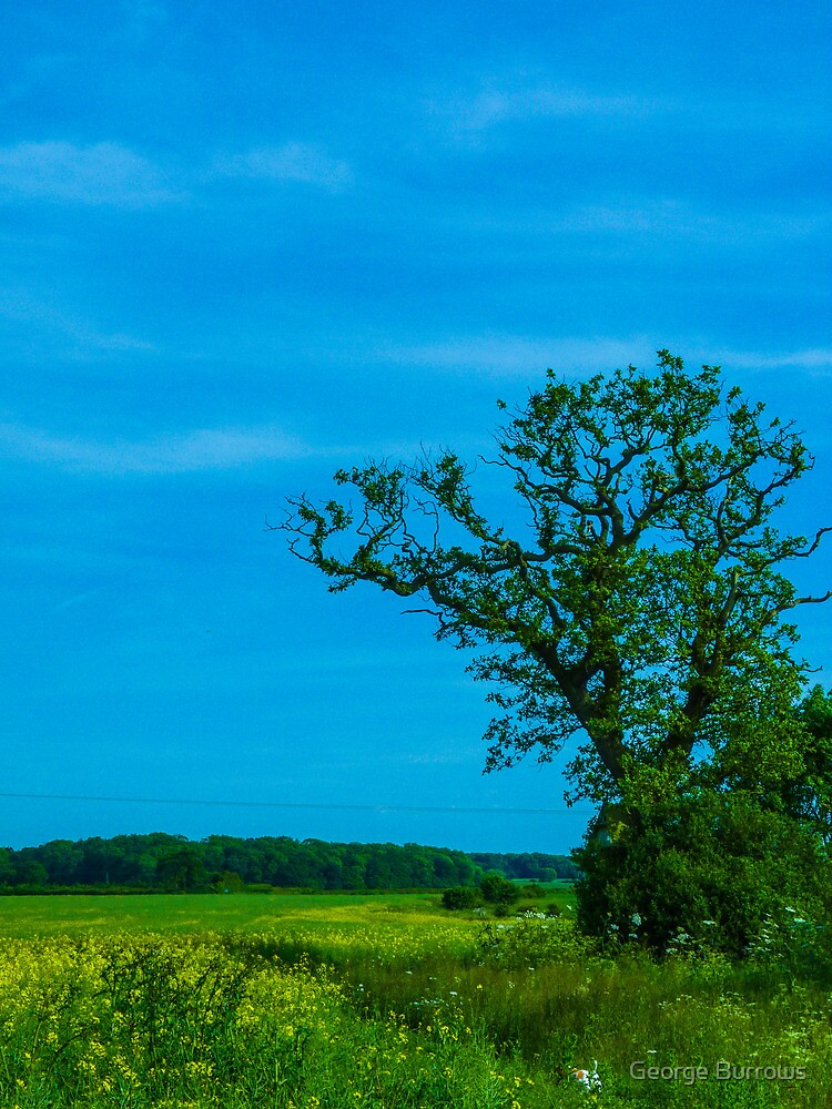 Old Oak  by George Burrows