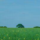 Oilseed Rape by George Burrows
