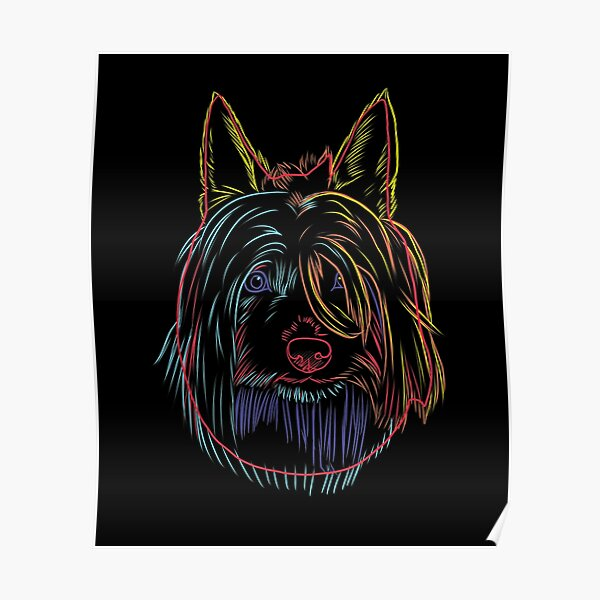 Colorful Dog Australian Silky Terrier  Poster