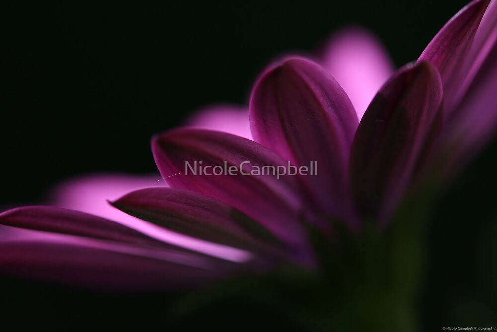 Radiance by NicoleCampbell