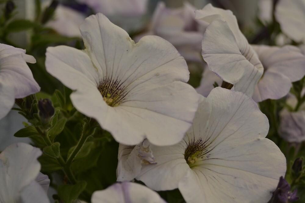 Nice flowers by henkiepenkie