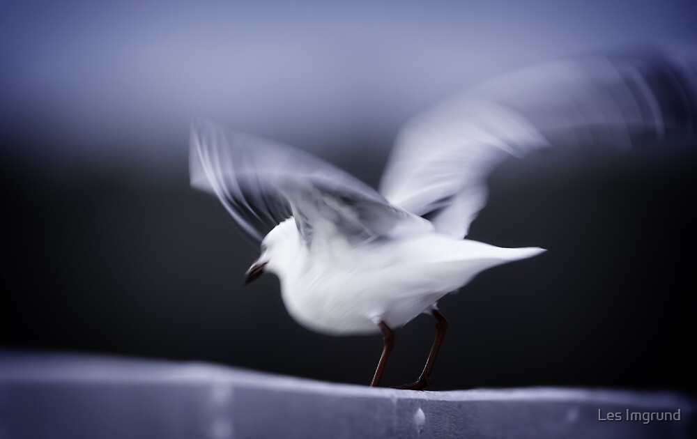 Silver Gull - Take Off by Les Imgrund